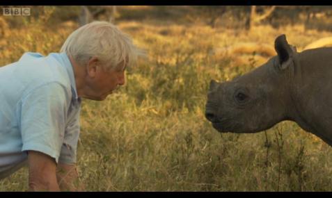 David meets Rhino